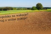 Wielkopolskainfo.pl z jeszcze lepszą wyszukiwarką!